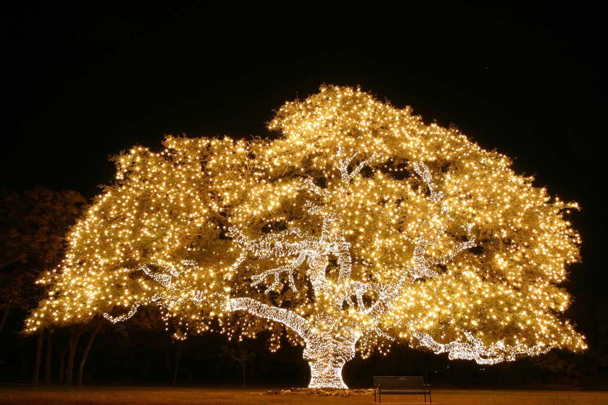Great Holiday Events in Austin 2019